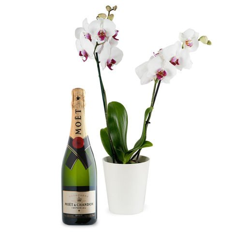 Orchid and Champagne Pack