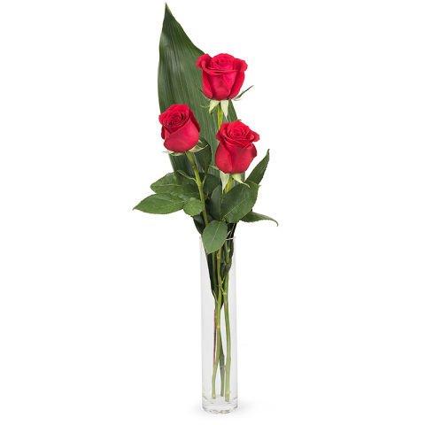 Douce caresse : 3 roses rouges et 1 nounours