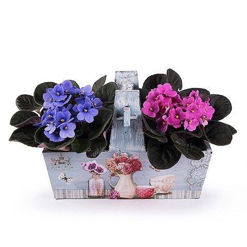 Color en una cesta: 2 Violetas africanas