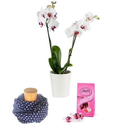 Elegancia: orquídea, fular y bombones