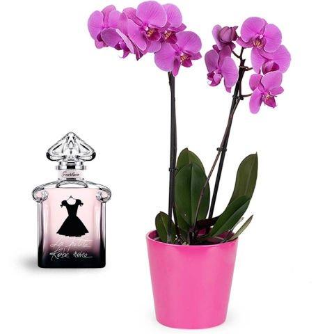 Très chic: orchidée et parfum