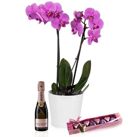 Marzenie Mamy: storczyk, czekolada i szampan